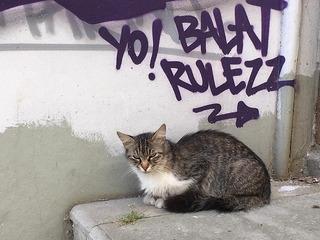 トルコの猫.jpg